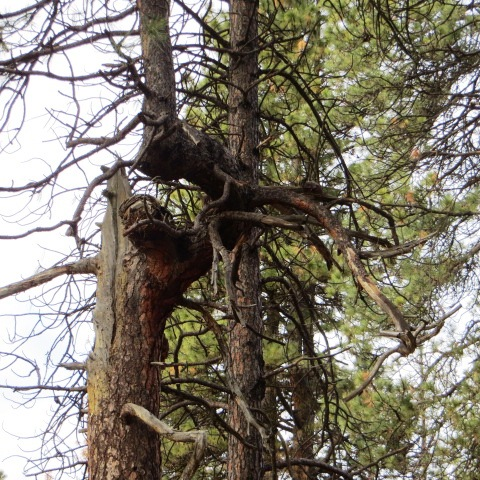 Check out this crazy tree trunk!
